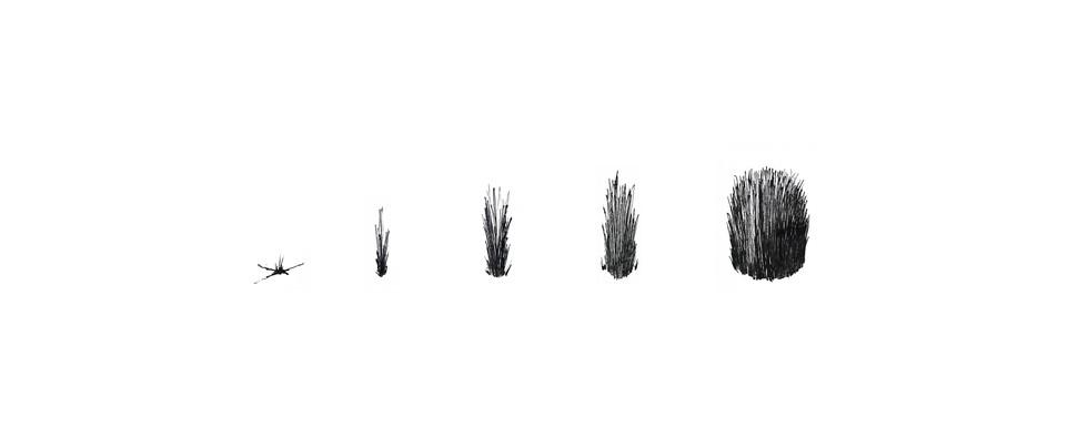 Concept 1 Grow 1.jpg