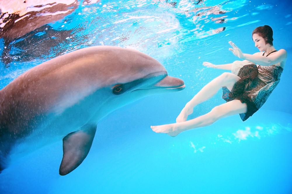 イルカと遊べる超音波ヒーリングとは