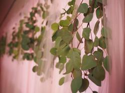 Eucalyptus & Tulle