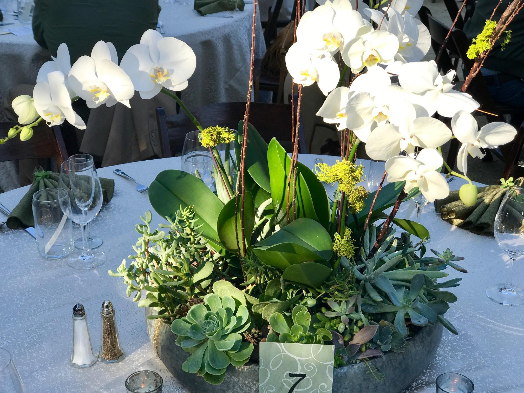 Orchids & Succulents
