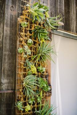 Succulent wall installation