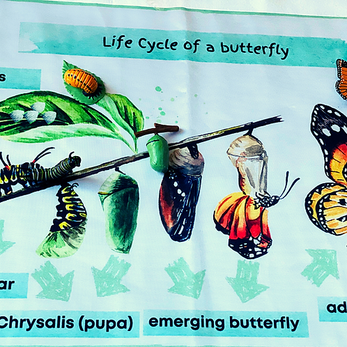 Life Cycle of a Butterfly Mat