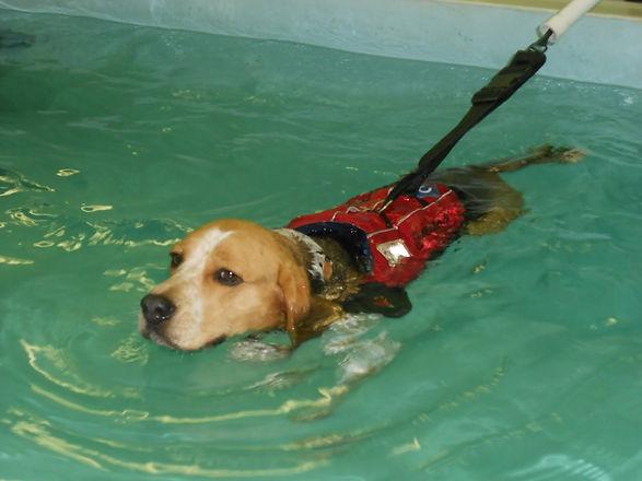 water dog3.jpg