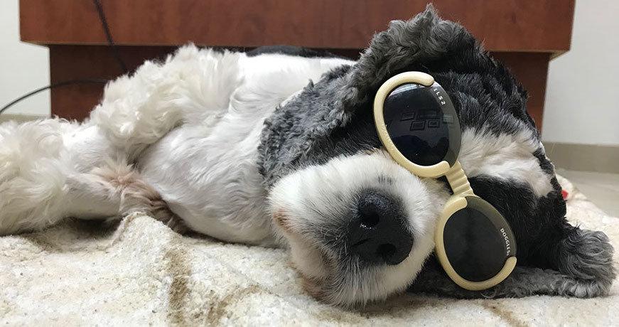 US dog1.jpg