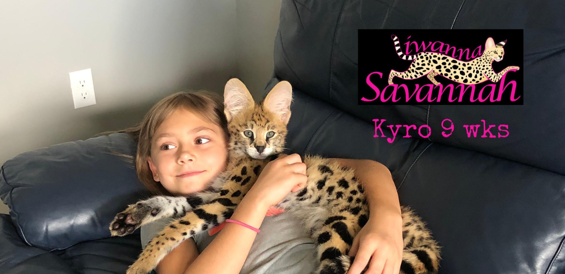 King Kyro African Serval