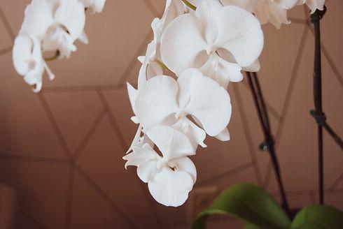 Encore Orchid