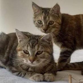 Natte et Satine (adoption fin Janvier)