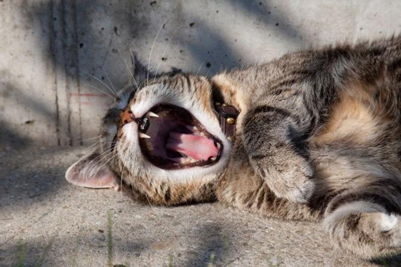 Burn-out, stress of vermoeidheid? | Shiatsu Massage Therapie Amsterdam