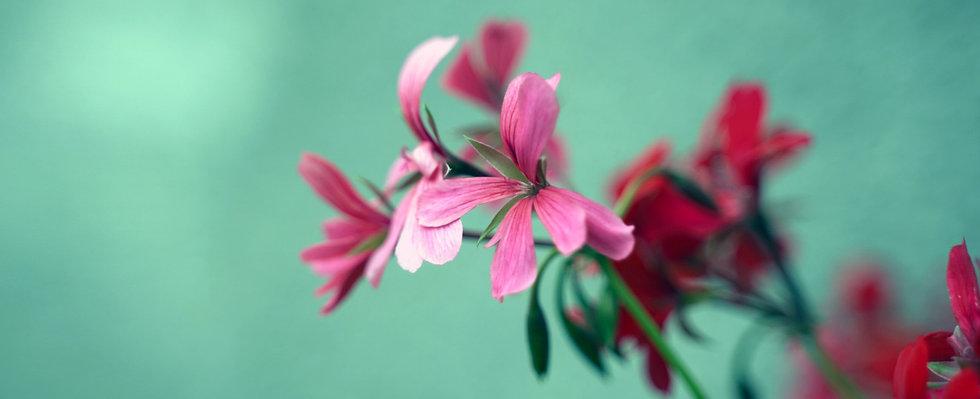 bloem roze(1).jpg
