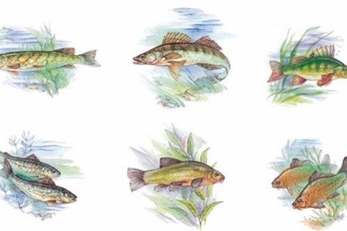 Fresh Water Fish Set of 6