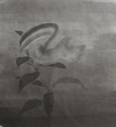 180709_百合_3.jpg