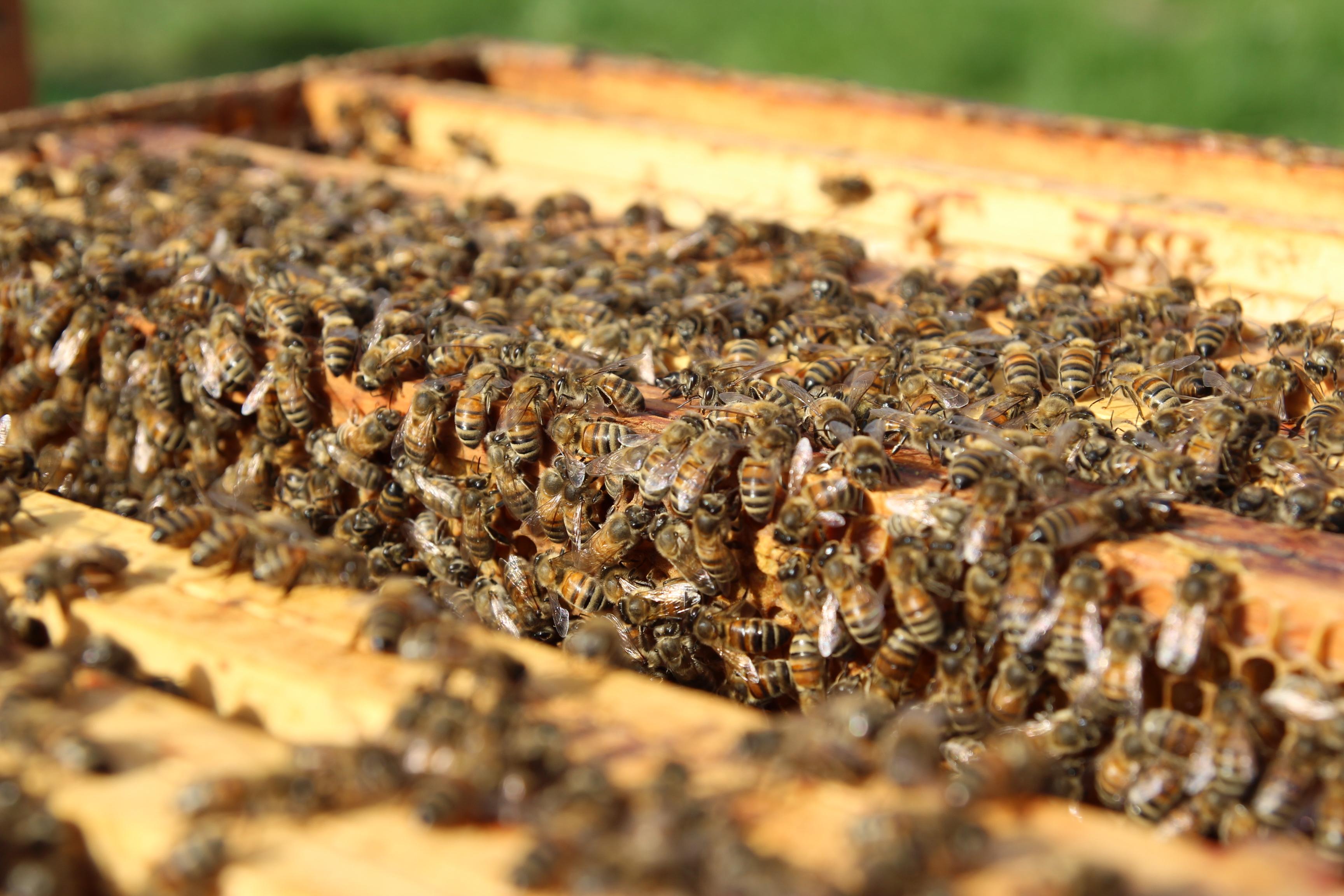 Bienen wollen ans Licht