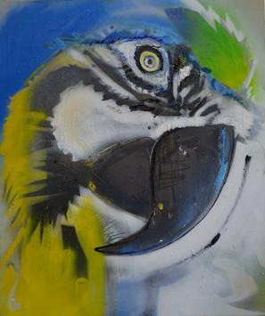 09 _Ara_oil, spray paint on canvas 50x60