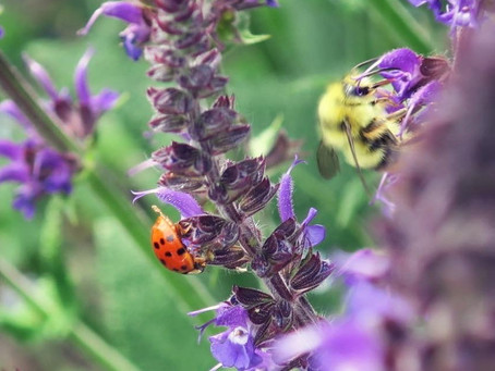 Want More Wildlife in Your Garden? A Few Small Changes Can Make all the Difference.