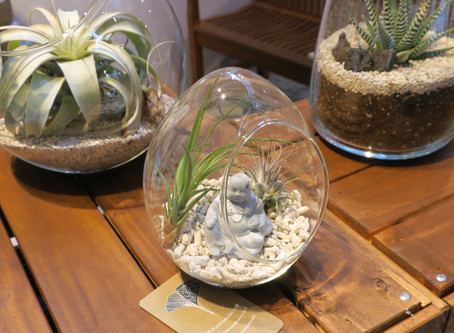 Terrarium Love - 7 reasons we all need one (or many) in our lives