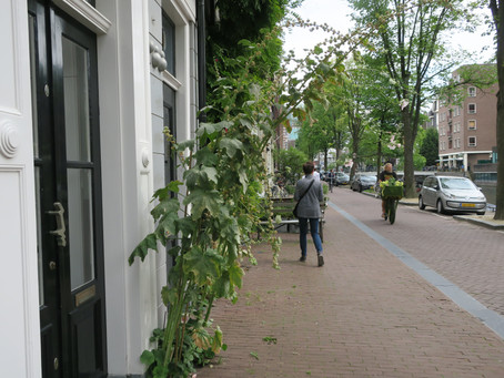 Guerrilla Green Inspiration, Amsterdam Style