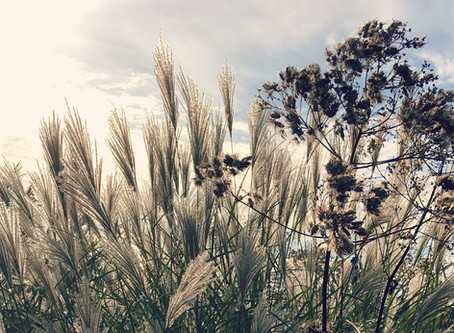 The Magic of Seedheads in the Garden
