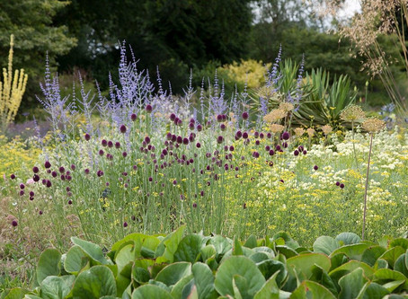 Bringing Structure into the Garden with Architectural Plants