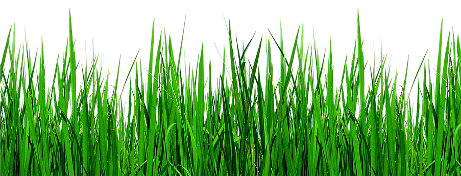 104-1046456_grass-border-png-green-grass