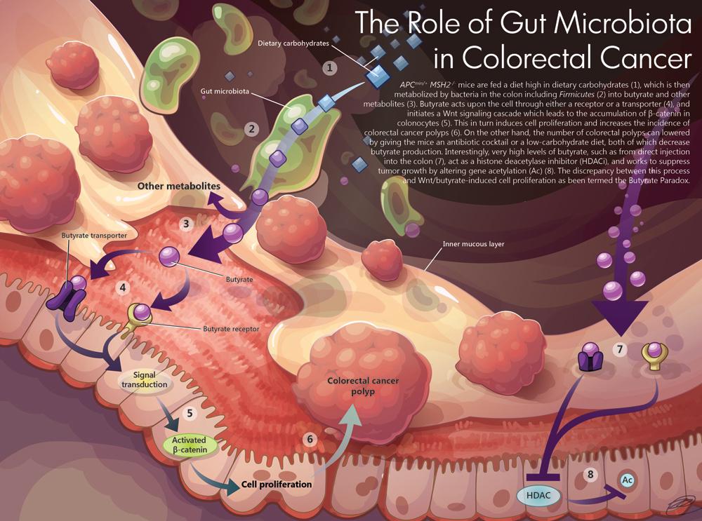 gut metabolism 3d resized