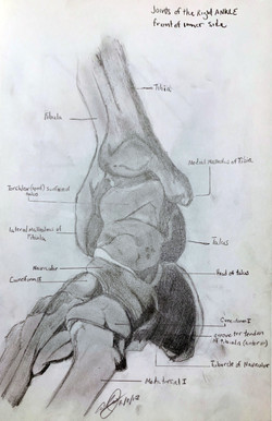 Right Ankle Study