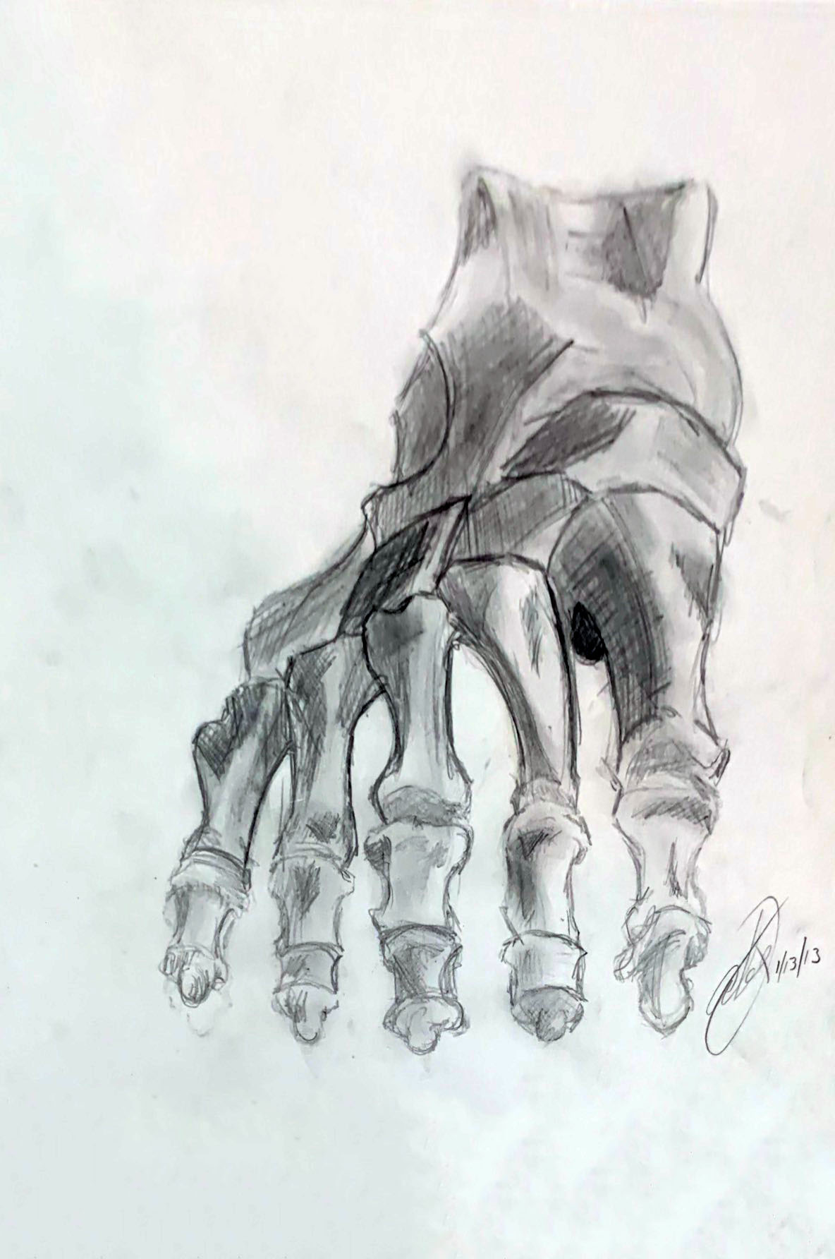Foot_Bone Study