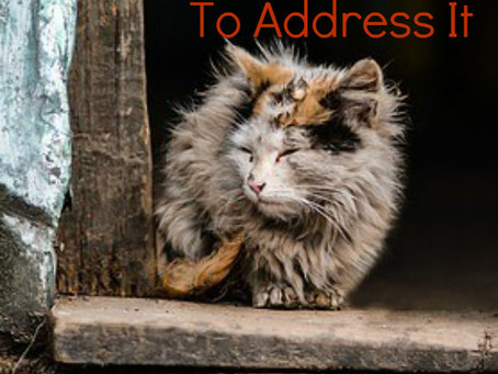 Signs of Animal Hoarding And How to Address It