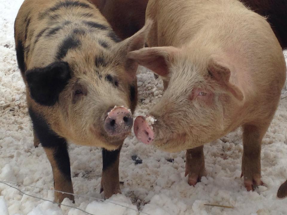 PiggieFriends