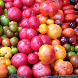 Cornerstone Tomatoes