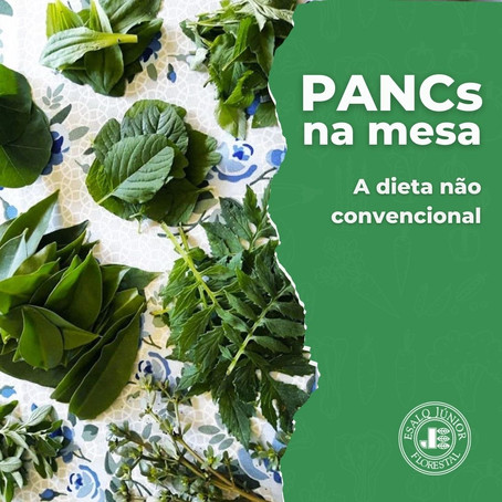 PANCs na mesa: a dieta não convencional