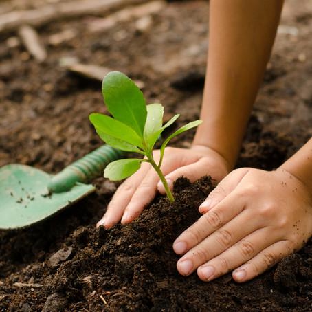 Neutralização de carbono através do plantio de mudas