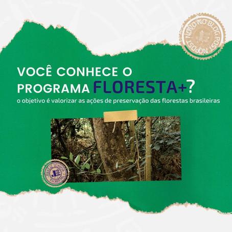 Você conhece a fundação do programa Floresta+ ?