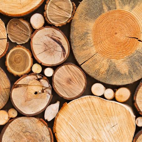 Certificação florestal: saiba mais sobre o que é e como funciona