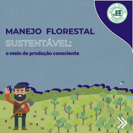Manejo Florestal Sustentável: o meio de produção consciente