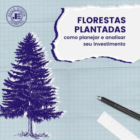 Florestas plantadas: como planejar e analisar seu investimento