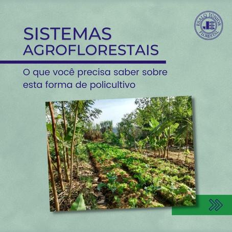 Sistemas Agroflorestais - O que você precisa saber sobre esta forma de policultivo