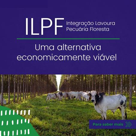 Integração Lavoura Pecuária Floresta: uma alternativa economicamente viável