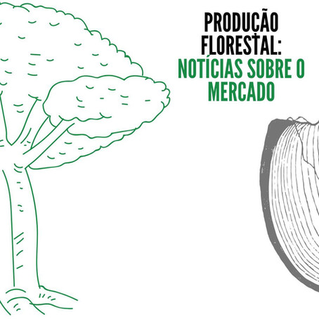 Produção Florestal: Notícias sobre o mercado