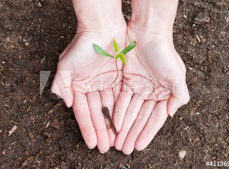 Reflorestamento: o que é?