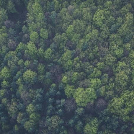 O que é gestão ambiental e o que os profissionais da área fazem?