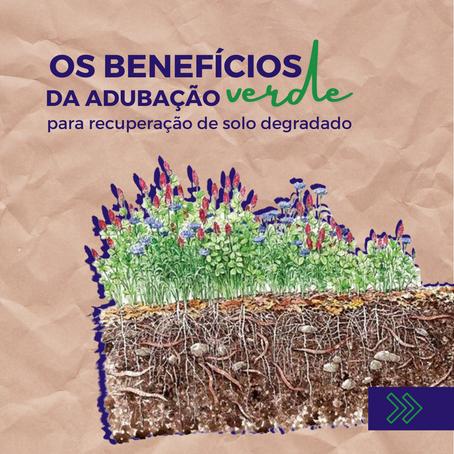 Os benefícios da Adubação Verde