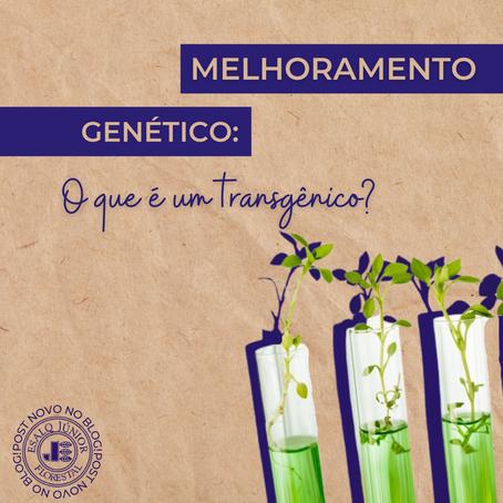 Melhoramento genético: o que é um transgênico?