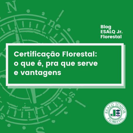 Certificação florestal: o que é, qual a importância e como funciona