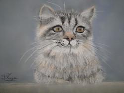 chat tigré.JPG