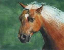 cheval arabe.JPG