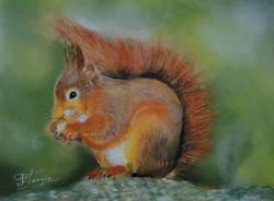 l'écureuil (2).JPG