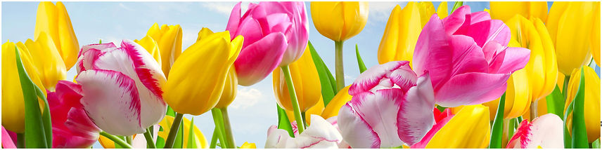 AG_04_Тюльпаны.jpg