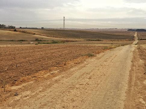 Agroindustrielle Landschaft