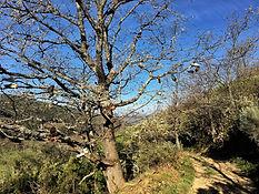 Etappe Requejo de Sanabría - Lubián