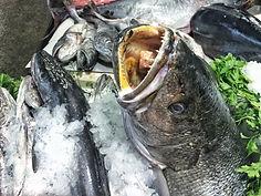 Am Fischmarkt in Cádiz